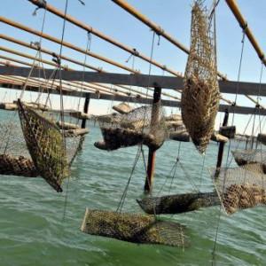 les-huitres-recoltees-avant-le-15-avril-peuvent-etre_300917_516x343