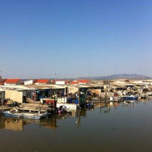 pescatourisme-viste-parc-huitre-leucate (2)